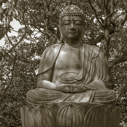 Buddha in the Trees, Tokyo, Japan  2016